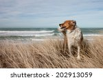 Dogs Playing In Long Dune Grass ...