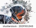Portrait Of A Rottweiler Dog....