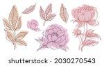 pastel pink floral line art set ...   Shutterstock .eps vector #2030270543