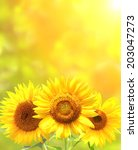 bright yellow sunflowers and sun | Shutterstock . vector #203047273