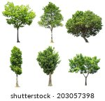 collection of tree isolated on... | Shutterstock . vector #203057398