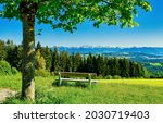 Wooden bench by a tree. Bench at tree. Tree bench panoramic landscape. Bench in mountains