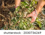 Hands Of Man In Gardening...