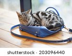 Stock photo sleep cat on the bag 203096440