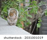 Squirrel Standing On A Roof