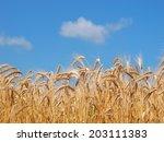 Wheat Ears On Field Under Blue...