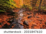 Autumn Leaves Along A Forest...
