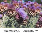 Thistle Flowers. Photo Toned...