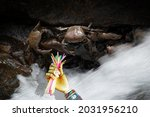 Freshwater Crabs In A Stream With A Craft Wooden Hand Holding Plastic Straws