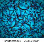Stock photo beautiful background with lot of different butterflys 203196034