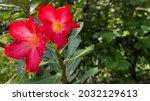 Tropical Red Flowers Desert...