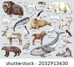 hand drawn arctic animals... | Shutterstock .eps vector #2032913630