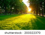 lawn of city park | Shutterstock . vector #203322370