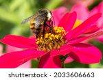 Beautiful Bumble Bee...