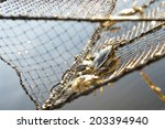 Blue Crab Outer Banks Crab Tra...
