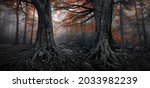 Forest In Autumn With Fog