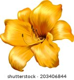 Vector illustration of Yellow lily. isolated on a white background