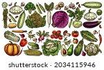 farm and garden vegetable... | Shutterstock .eps vector #2034115946