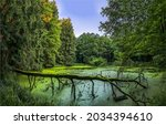 A forest swamp in the wilderness. Swamp in forest. A swamp with a quagmire in the forest. Forest swamp view