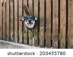 curious dog looking from the... | Shutterstock . vector #203455780