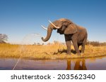 Stock photo elephant 203562340