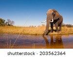 elephant drinking water | Shutterstock . vector #203562364