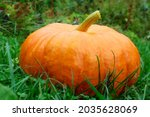 Ripe ginger pumpkin isolated on ...