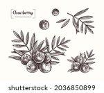 acai berries. vector hand drawn ...   Shutterstock .eps vector #2036850899