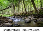Small photo of A forest stream in the wilderness. Forest river stream flowing. Cold creek in forest. Forest creek