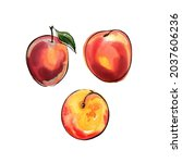 red peach fruit drawing with... | Shutterstock . vector #2037606236