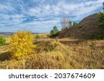Birch  Oaks  Linden  Maples ...