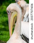 A Vertical Shot Of A Pelican On ...