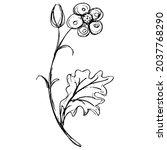 blooming flower branch.... | Shutterstock .eps vector #2037768290