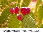 A Closeup Of Eastern Prickly...