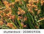 Summer Flowering Bright Vivid...