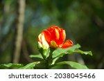 Rose Cactus.it Is A Plant...