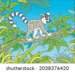 exotic tropical madagascar ring ... | Shutterstock .eps vector #2038376420