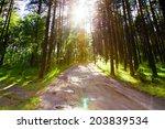 forest road   Shutterstock . vector #203839534