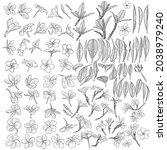 real plumeria flowers bloom on... | Shutterstock .eps vector #2038979240