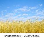 golden wheat field with blue... | Shutterstock . vector #203905258