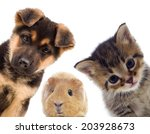 puppy and kitten and guinea pig  | Shutterstock . vector #203928673