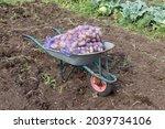 Garden Wheelbarrow Standing...