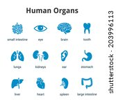 Blue Medical Human Organs Icon...