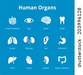 white medical human organs icon ... | Shutterstock .eps vector #203996128