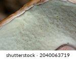 White Mushroom Close Up. Cap ...