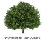Horse Chestnut Tree Isolated O...