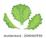lettuce. green lettuces leaves... | Shutterstock .eps vector #2040465950