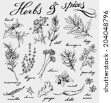 hand drawn herbs and spices... | Shutterstock .eps vector #204048796