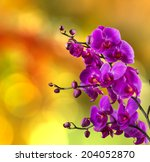 purple orchid flower close up on blurred yellow and red garden background - stock photo