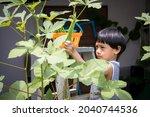 Child Picking Okra  Kid N Hand...